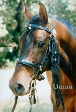 Oman in Authentic Hungarian Bridle
